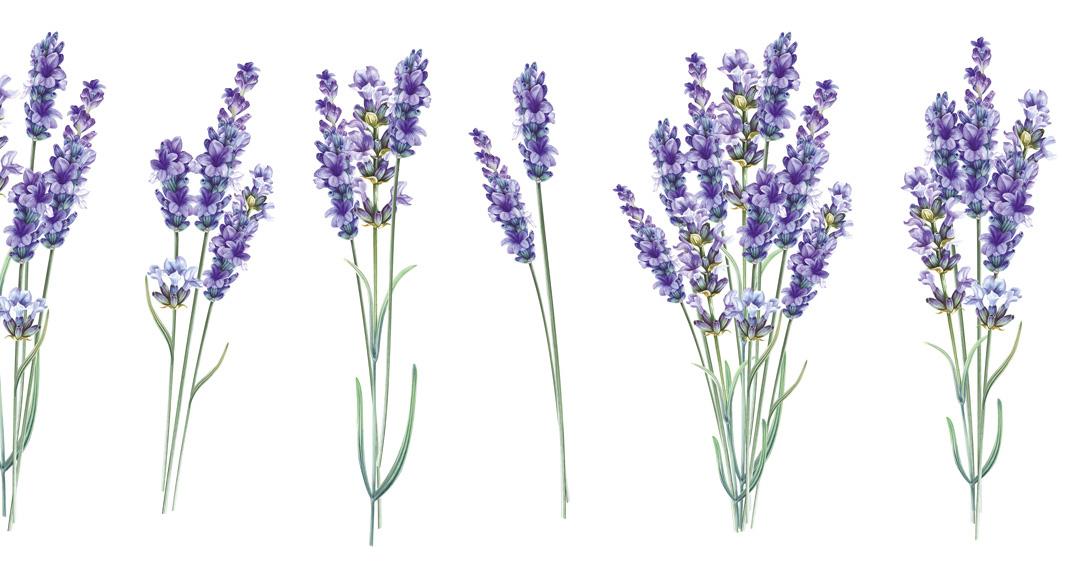 Teba_Lavendel_Schutz_natuerlich_gegen_Insekten