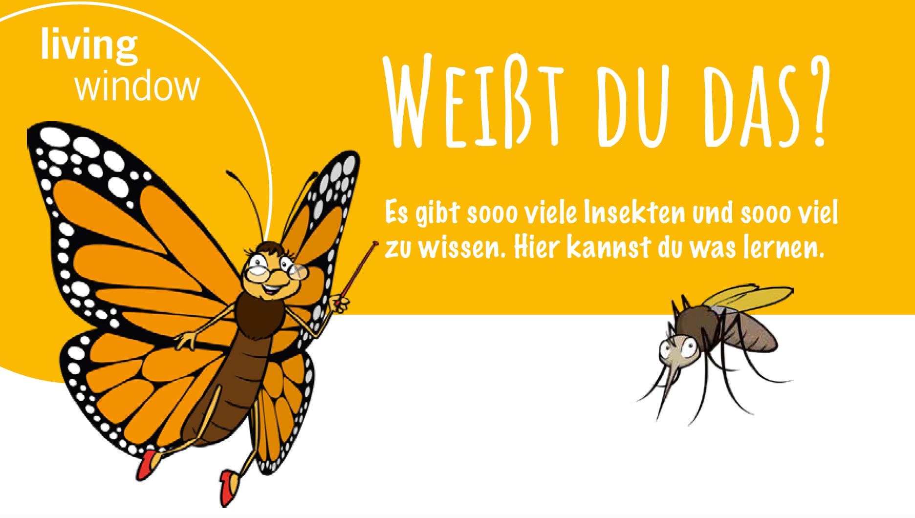 Weißt du das über Insekten