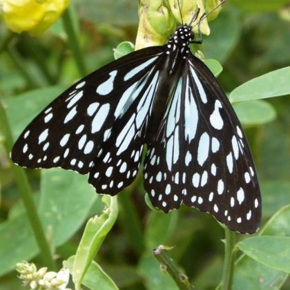 Teba_Insektenschutz_Schmetterling